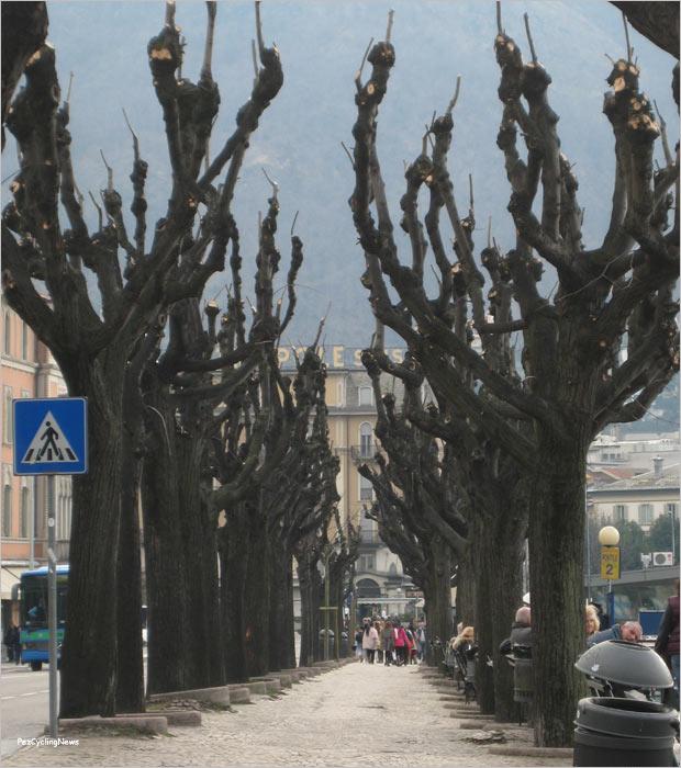 como13-29trees