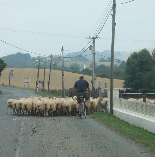 franceinside-13nov-sheep