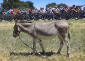 sanluis13_donkey650