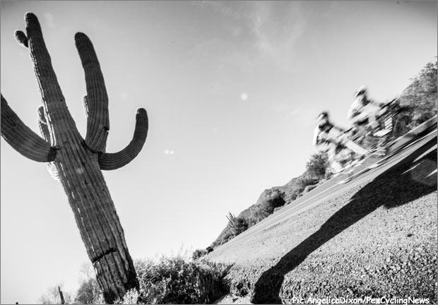 bespoke14-saguaroblur620