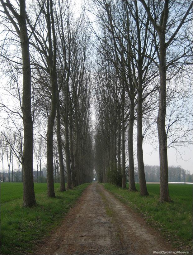 roubaix12-13trees620