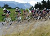 suisse14st5_grass_650