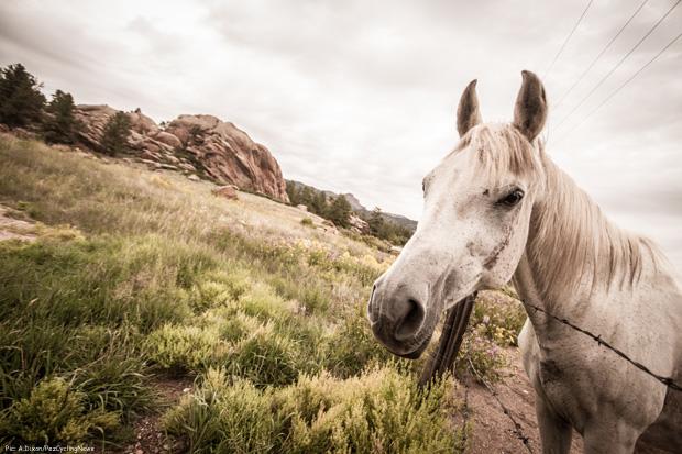 usapcc14st05-horse