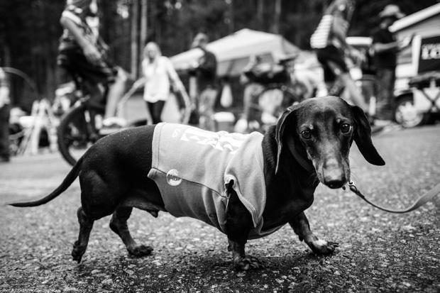 usapcc14st05-longdog