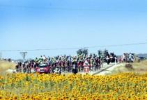 vuelta14st9-sunflowers