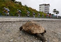 15tur1_turtle