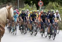 lombardia15-peloton-horse-1200