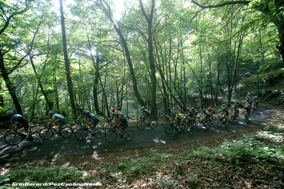 gfsestriere16-forest