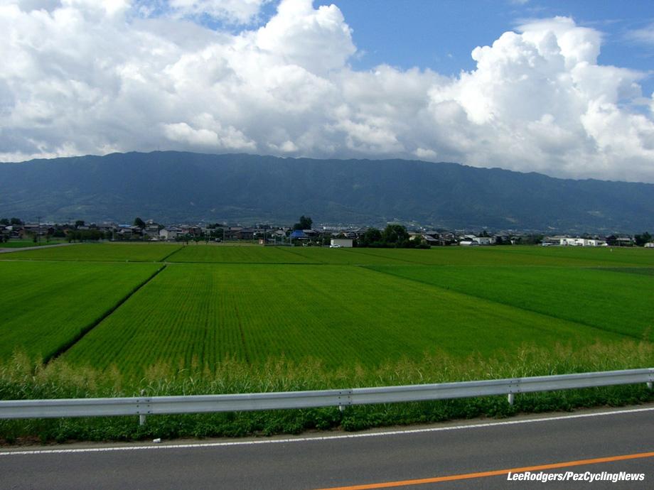 lowdown-japan16-rice2-920