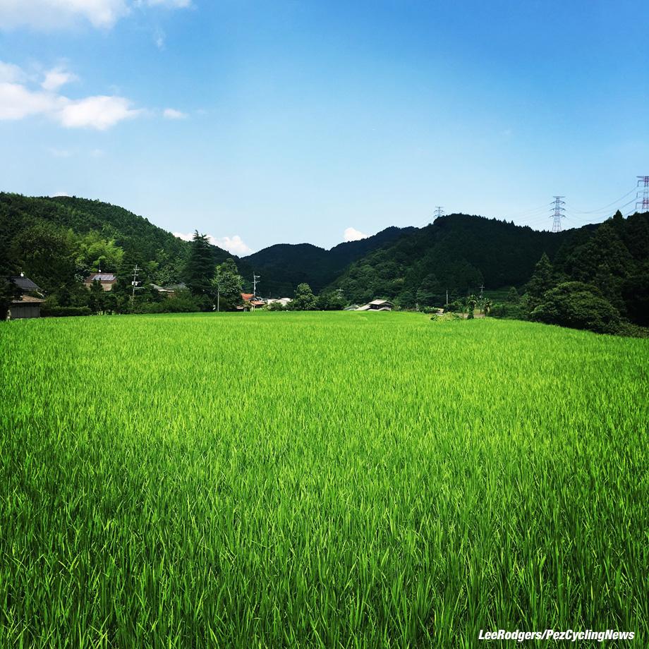 lowdown-japan16-rice3-920