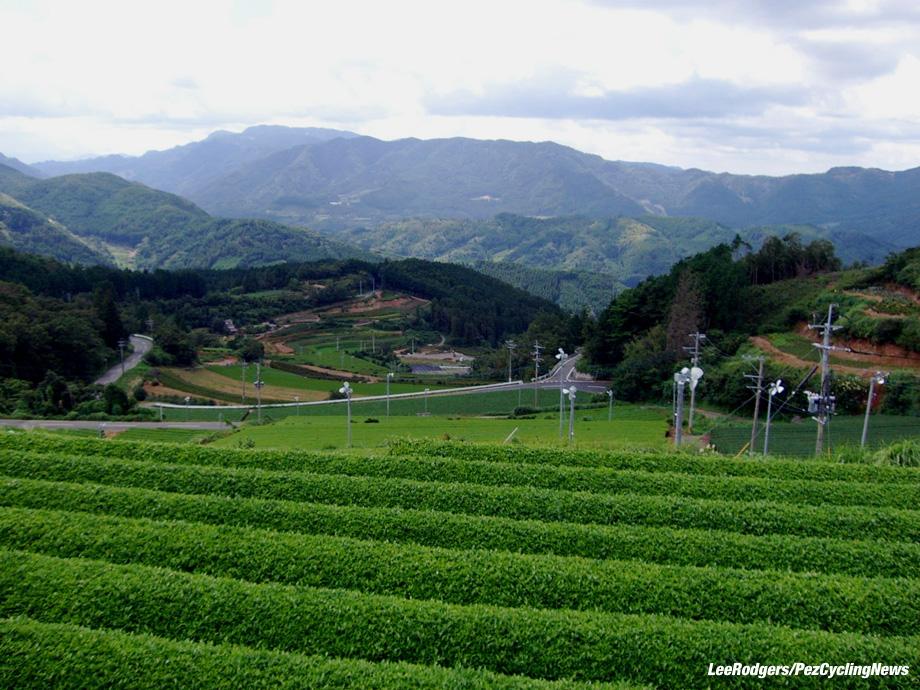 lowdown-japan16-tea-920