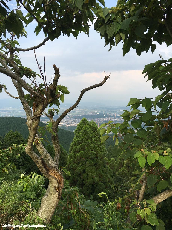 lowdown-japan16-trees-920
