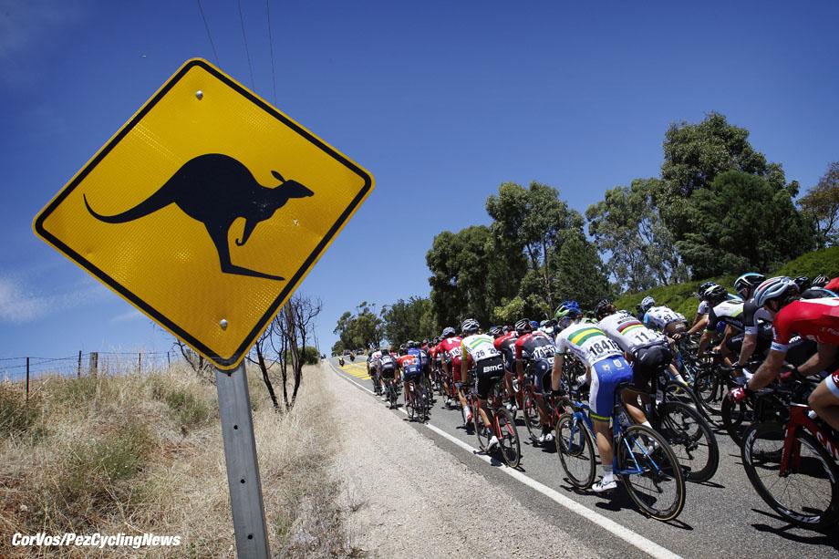 Lyndoch - Australia - wielrennen - cycling - radsport - cyclisme - illustration - sfeer - illustratie pictured during  the Santos Tour Down Under 2017  - Hostworks Stage 1 - in Lyndoch, Australia on jan 17 - photo Dion Kerckhoffs/Cor Vos © 2017