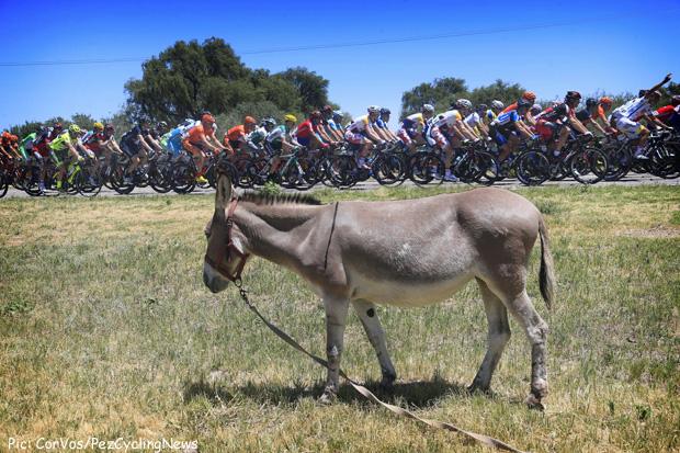 sanluis13_donkey