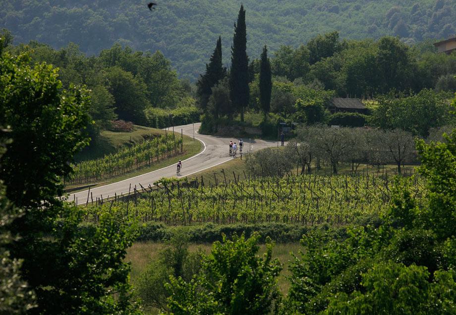 gardabike16-vineyards