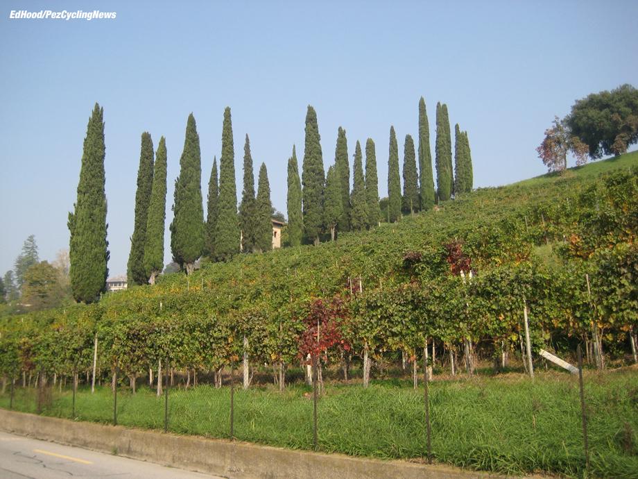 lombardia07eh-vineyards-mendrisio2-920