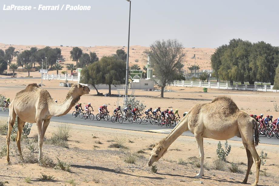 Foto LaPresse - Fabio Ferrari 08/02/2018 Dubai (Emirati Arabi Uniti) Sport Ciclismo Dubai Tour 2018 - 5a edizione - Tappa 3 - Dubai Silicon Oasis Stage - da Skidive Dubai a Fujairah - 180 km (111,8 miglia) Nella foto:   Photo LaPresse - Fabio Ferrari 08/02/2018 Dubai (United Arab Emirates)  Sport Cycling Dubai Tour 2018 - 5th edition -  Stage 3 - Dubai Silicon Oasis Stage - Skidive Dubai to Fujairah - 180 km (111,8 miles) In the pic: